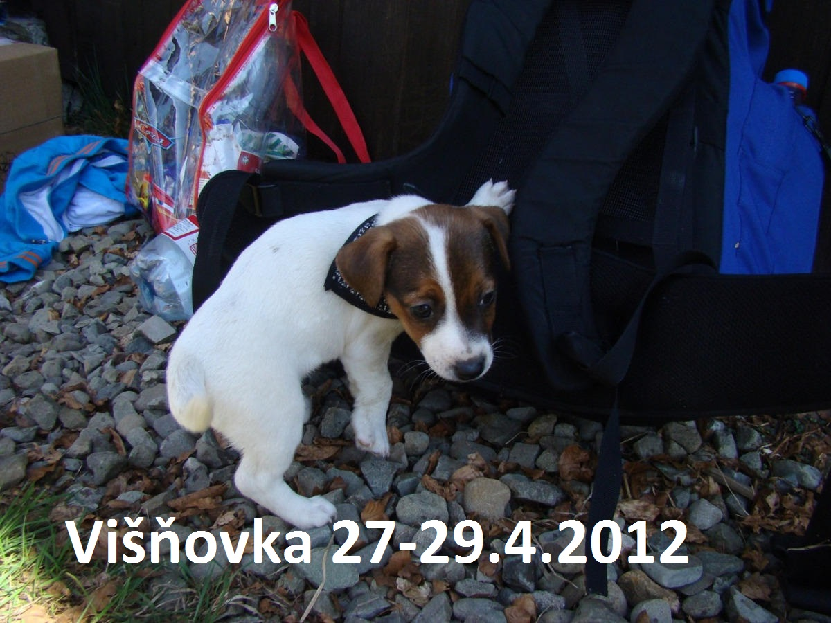 Visnovka_4.2012